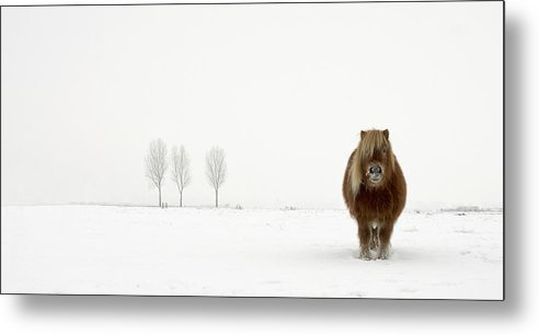 Horse Metal Print featuring the photograph The Cold Pony by Gert Van Den