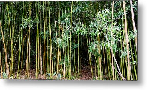 Bamboo Wind Chimes Metal Print featuring the photograph Bamboo Wind Chimes Waimoku Falls trail Hana Maui Hawaii by Michael Bessler