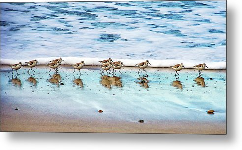 Animal Themes Metal Print featuring the photograph Shorebirds by Vanessa Mccauley