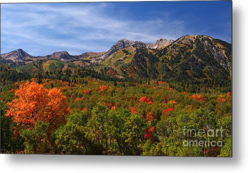Mount Ogden Metal Print featuring the photograph Early Fall Color by Bill Singleton