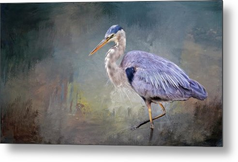 Great Blue Heron Metal Print featuring the photograph Closing-in, Great Blue Heron by Zayne Diamond Photographic