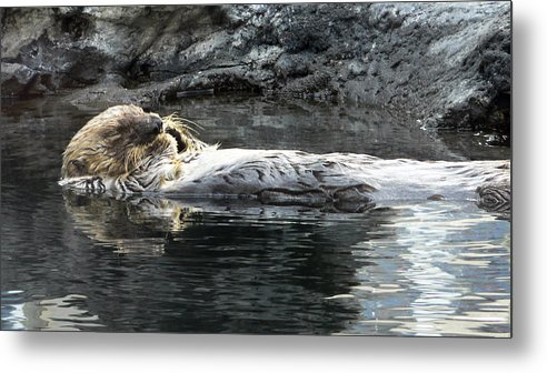 Aquarium Metal Print featuring the photograph Lazy Day by Larry Keahey