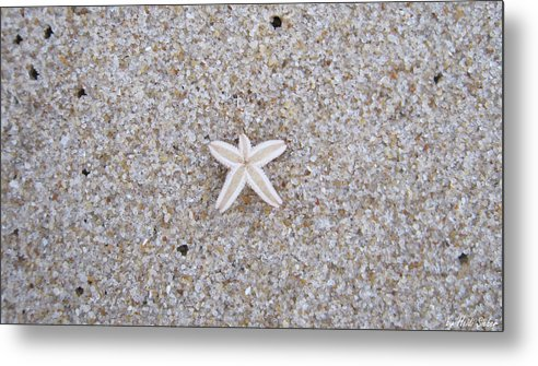 Sylt Metal Print featuring the photograph Small Star Fish by Heidi Sieber