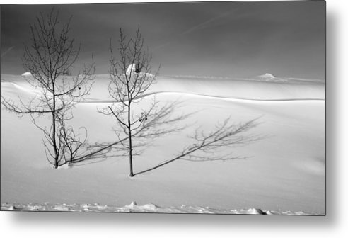 Nature Metal Print featuring the photograph Twins by Skip Hunt