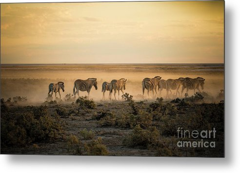 Dawn Metal Print featuring the photograph Namibia, Etosha National Park, Herd by Westend61