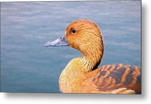 Birds Metal Print featuring the mixed media Ducky by Steve DaPonte