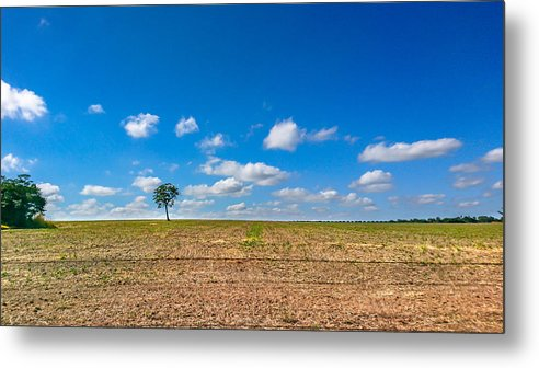 Scenics Metal Print featuring the photograph The loneliness of the tree in the middle of the soy plantation in the rural area of Piracicaba. by CRMacedonio
