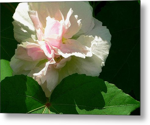 China Rose Metal Print featuring the photograph China Rose 1 by James Temple