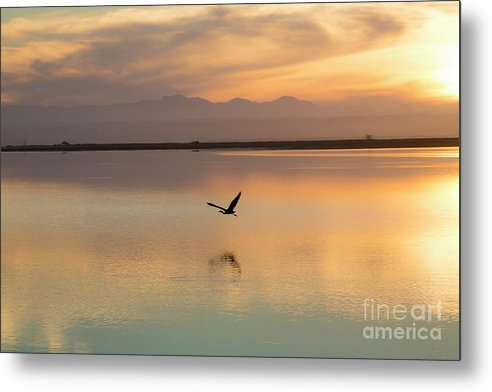 Heron Metal Print featuring the photograph Heron at sunset by Sheila Smart Fine Art Photography