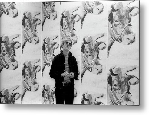 Andy Warhol Metal Print featuring the photograph Andy Warhol and Cows by Fred W. McDarrah
