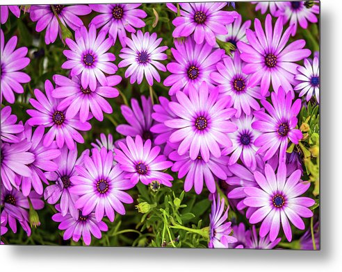 Flowers Metal Print featuring the photograph Flower Patterns Collection Set 04 by Az Jackson