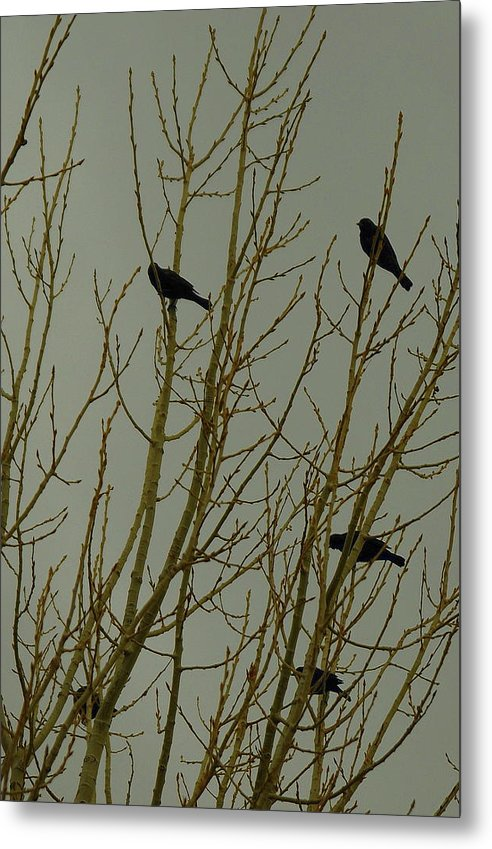 Birds Metal Print featuring the photograph Birds by Patrick Short