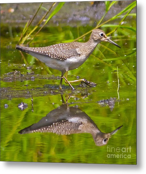 Marsh Metal Print featuring the photograph Reflections by Christopher Swass