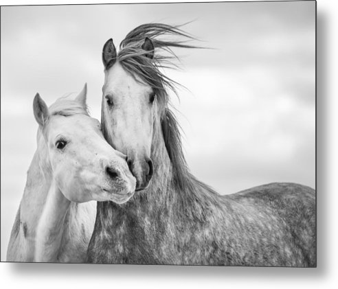 Horse Metal Print featuring the photograph Best Friends I by Tim Booth