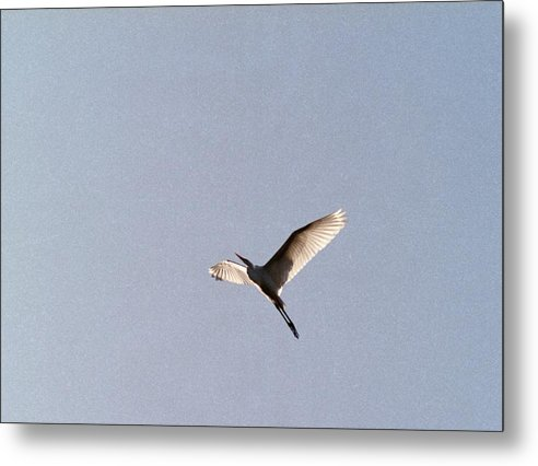 Egret Metal Print featuring the photograph 070406-25 by Mike Davis