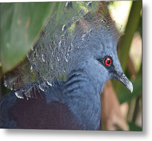 Wild Bird Metal Print featuring the photograph Feather Crown by Maggy Marsh