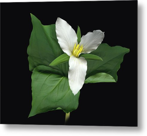 Trillium. Wake Robin Metal Print featuring the digital art Trillium by Sandi F Hutchins