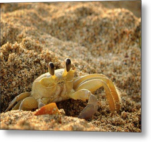 St Lucia Metal Print featuring the photograph Caribbean Crab by J R Baldini M Photog Cr