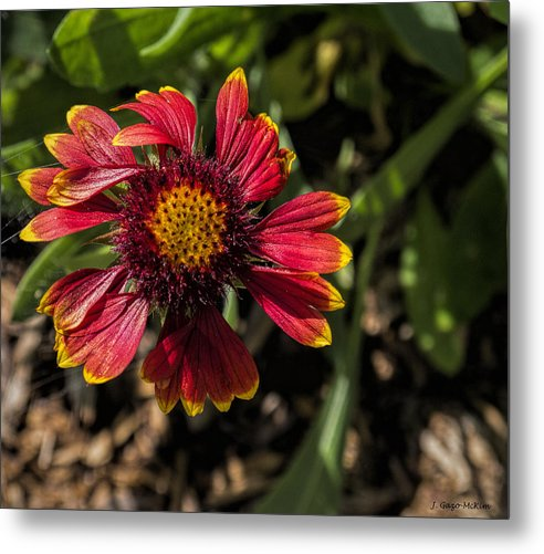 Flower Metal Print featuring the photograph Twisted Petals by Jo-Anne Gazo-McKim