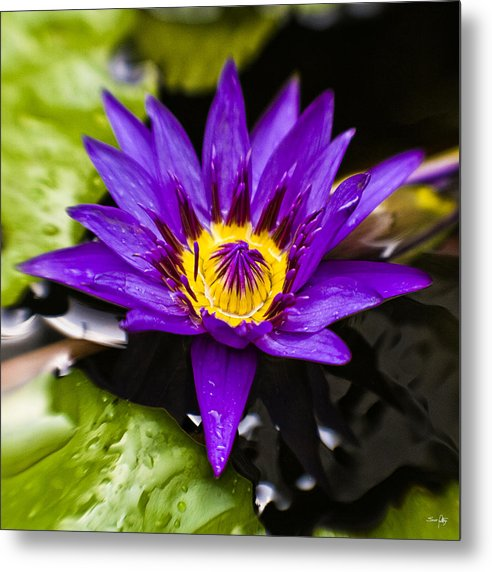 Lotus Metal Print featuring the photograph Bayou Beauty by Scott Pellegrin