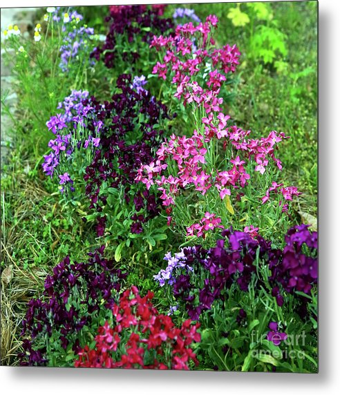 Colors In The Garden Metal Print featuring the photograph Colors In The Garden by John Rizzuto