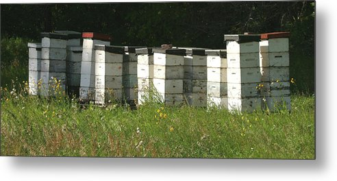 Hives Metal Print featuring the photograph Bee Hives In A Farmer's Field by Jack Dagley