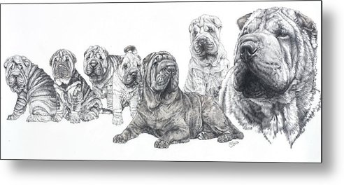 Non-sporting Group Metal Print featuring the drawing Growing Up Chinese Shar-pei by Barbara Keith