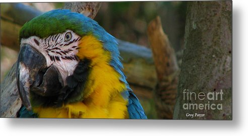 Patzer Metal Print featuring the photograph Blue And Gold by Greg Patzer