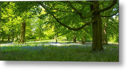 Bluebells Metal Print featuring the photograph The Bluebell Wood by Moments In Time Photographics
