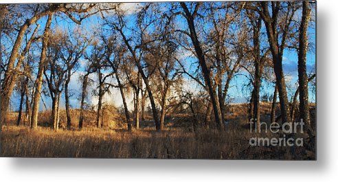 Cottonwoods Metal Print featuring the photograph The Ballroom by Kevin Albright
