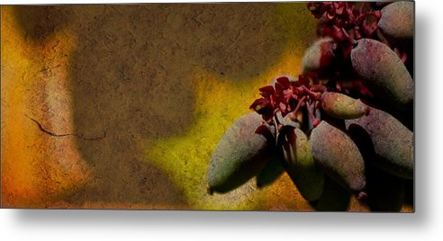 Fruit Metal Print featuring the photograph Who Knows by Trish Tritz
