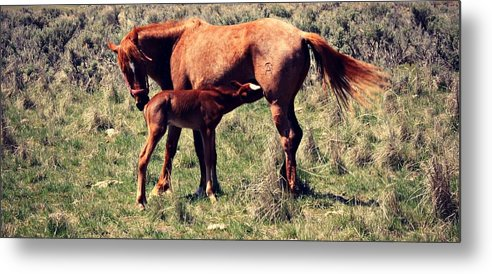 Mother And Baby Metal Print featuring the photograph Mother And Baby by Goldie Pierce