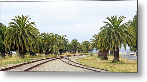 Scenic Metal Print featuring the photograph The Palms By The Tracks by AJ Schibig