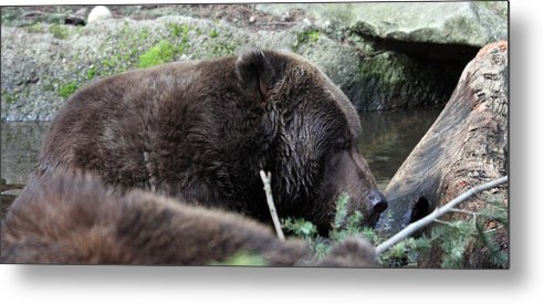 Northwest Trek Metal Print featuring the photograph Grizzley - 0004 by S and S Photo