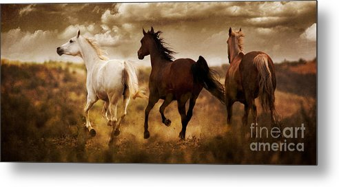 Running Horses Metal Print featuring the photograph Run For The Hills by Patty Hallman