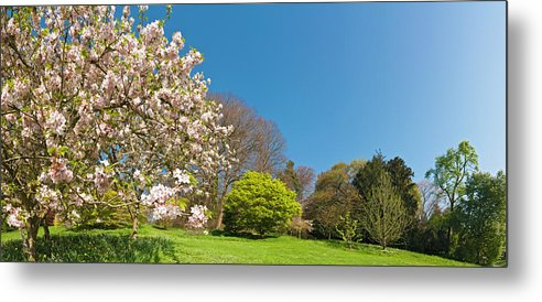 Scenics Metal Print featuring the photograph Pink Blossom Blooming Lush Green Spring by Fotovoyager