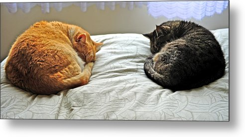 Two Cats Metal Print featuring the photograph Cats by Raimond van Donk