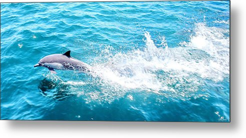 Sea Of Cortez Metal Print featuring the photograph Dolphin In Baja by Russ Harris