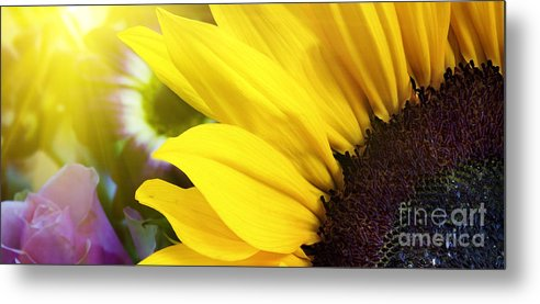 Sunflower Metal Print featuring the photograph Sunflower Closeup In Landscape by Simon Bratt Photography LRPS