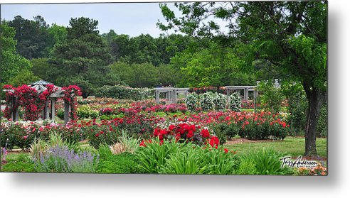 Roses Metal Print featuring the photograph The Garden Of Bloom by Tazz Anderson