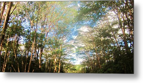 Jugle Metal Print featuring the photograph Electric Trees by Charles Jennison