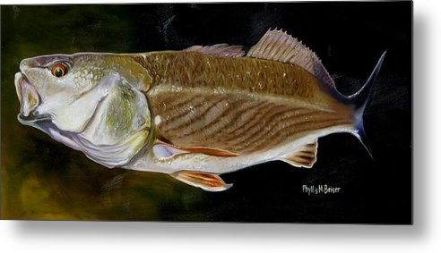 Fish Metal Print featuring the painting Redfish Study by Phyllis Beiser