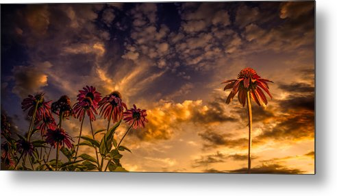Flower Metal Print featuring the photograph Echinacea Sunset by Bob Orsillo