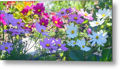 Flowers Metal Print featuring the photograph Splash Of Color by AJ Schibig