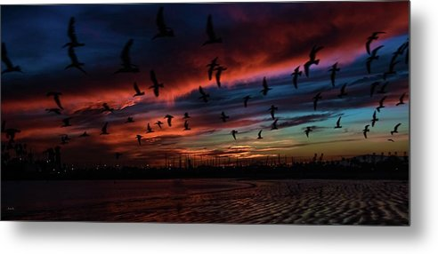 Skimmers Metal Print featuring the photograph Birds Above by John R Williams
