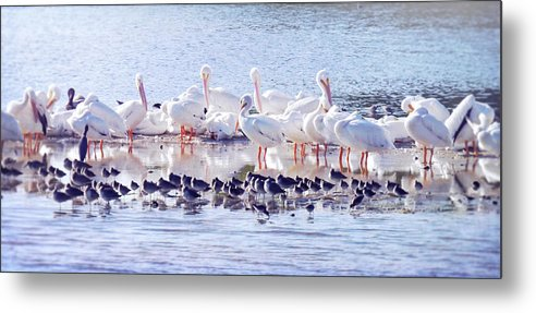 Sanibel Metal Print featuring the photograph Ding Darling Wildlife Refuge V by Tina Baxter