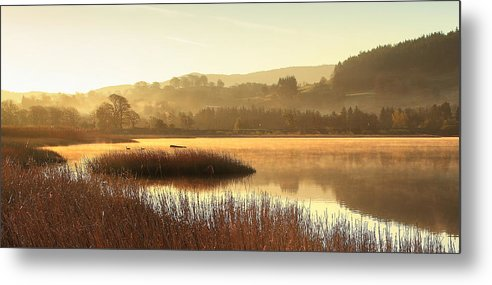 Lake Metal Print featuring the photograph Lake Life by Weihong Zhao