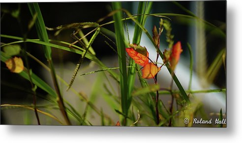 Wild Metal Print featuring the photograph Wild Plants by Roland Hall