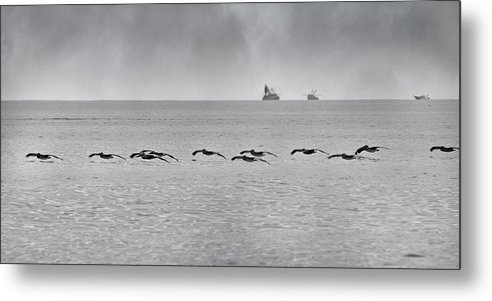 Pelican Metal Print featuring the photograph Destination by Betsy Knapp
