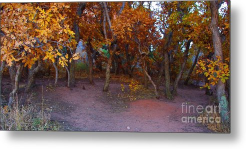 Trees Metal Print featuring the photograph Enchanted Woods by Brandi Christon